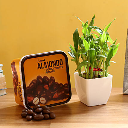 2 Layer Bamboo & Amul Wafers: Lucky Bamboo Plants