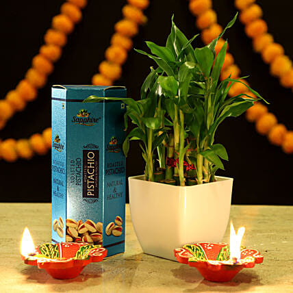 2 Layer Bamboo Festive Combo: Ornamental Plant Gifts