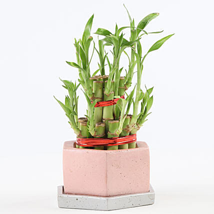 2 Layer Bamboo In Hexafun Concrete Pot With Tray: Office Desk Plants