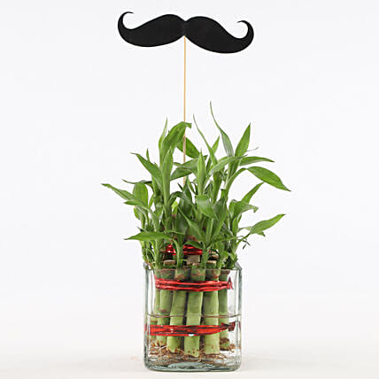 2 Layer Bamboo Plant With Mustache: Buy Indoor Plants
