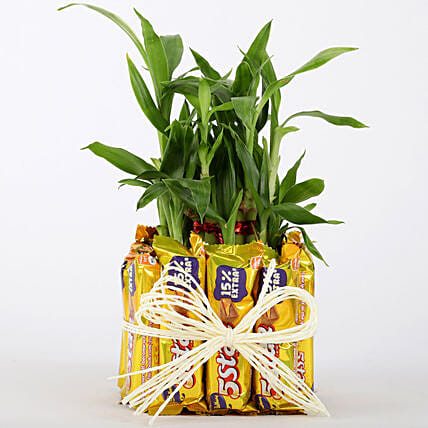 2 Layer Lucky Bamboo With 12 Chocolates: Home Decor Gifts Ideas