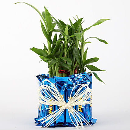 2 Layer Lucky Bamboo With Perk Chocolates: Office Desk Plants