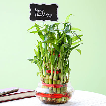 3 Layer Bamboo Plant For Happy Birthday: Home Decor