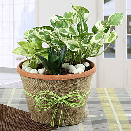 Air Purifying Dish Garden: Good Luck Plants