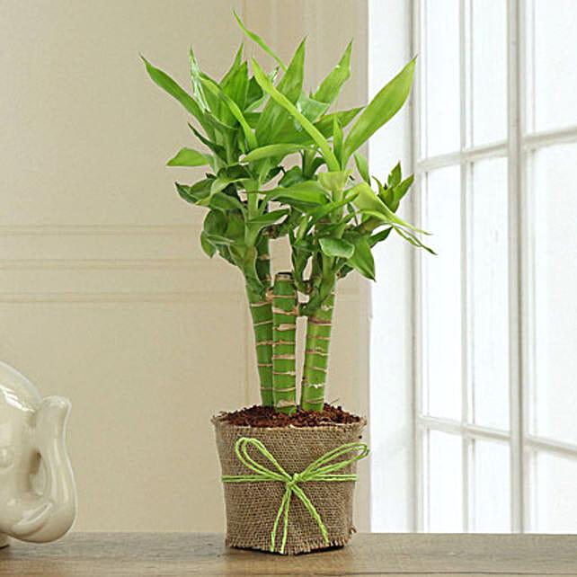 Bamboo Plant Decor: Foliage Plants