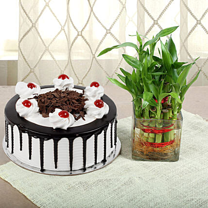 Blackforest Cake N Two Layer Bamboo Plant: