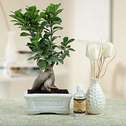 Bonsai N Oil Diffuser: