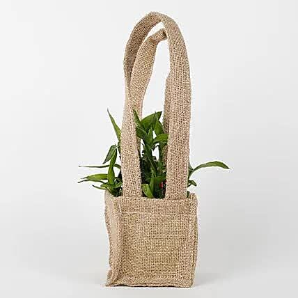 Carry Lucky Bamboo Plant Around: Indoor Plants