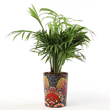 Chamaedorea Plant with Printed Ceramic Vase: Buy Indoor Plants