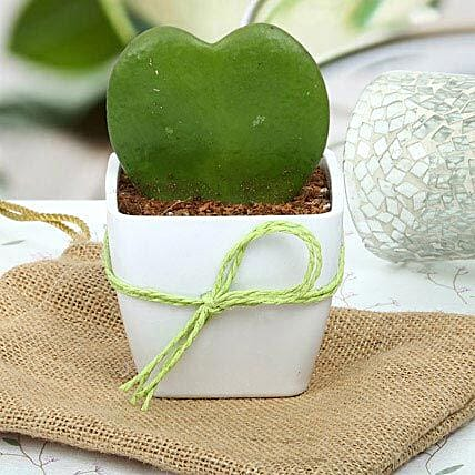 Cute Love Plant: Buy Indoor Plants