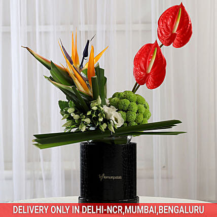 Exotic Box of Anthuriums & Bird of Paradise: Anthuriums