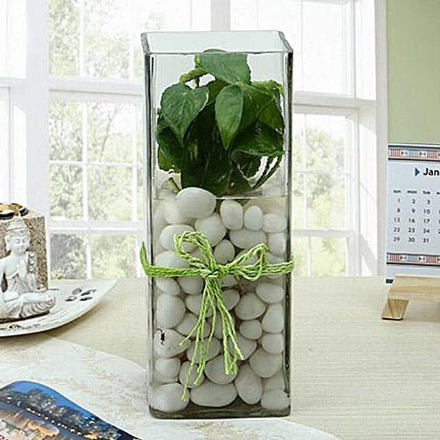 Fashionable Money Plant Terrarium: Office Desk Plants