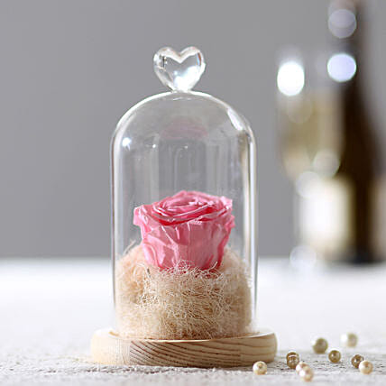 Forever Baby Pink Rose in Glass Dome: