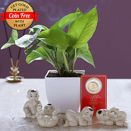 Free Gold Plated Coin & Money Plant White Pot: Buddha Collection