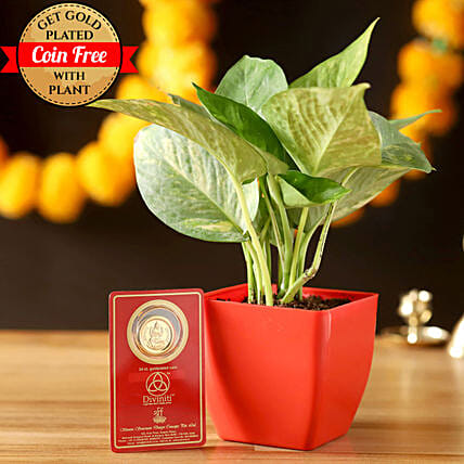 Free Gold Plated Coin & Money Plant: Plant New Arrivals
