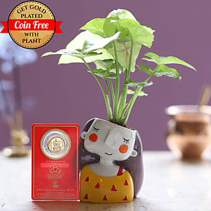 Free Gold Plated Coin With Syngonium Plant Combo: Gift Ideas