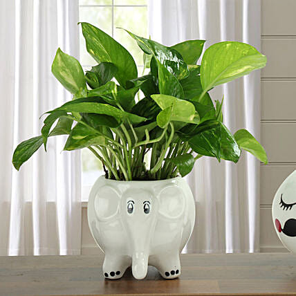 Freshen Up Money Plant: Gifts for Basant Panchami