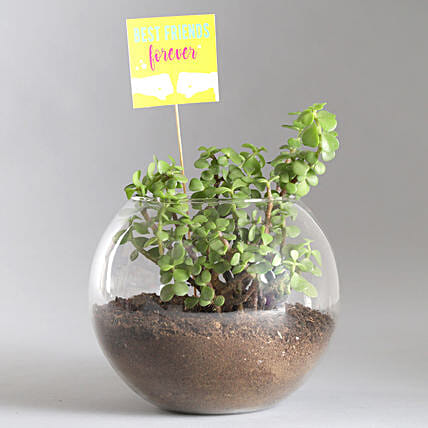 Friends Forever Jade Plant Terrarium: Gifts For Friendship Day