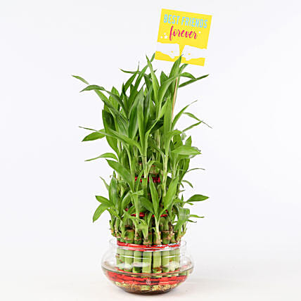 Friends Forever Three Layer Bamboo Plant: Friendship Day Gifts