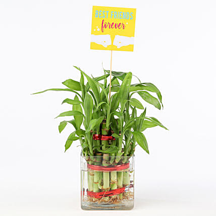 Friends Forever Two Layer Bamboo Plant: Friendship Day Gifts