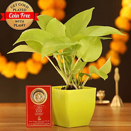 Golden Money Plant With Free Gold Plated Coin: Buy Indoor Plants