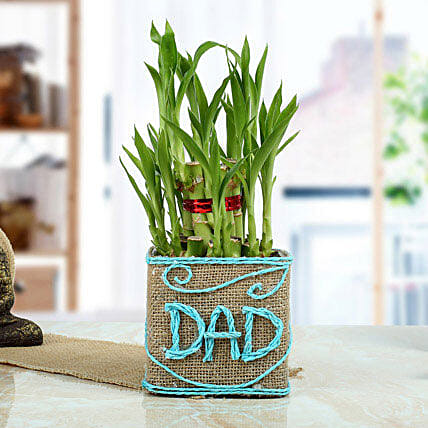 Good Luck Bamboo Plant for Dad: Exotic Plant Gifts