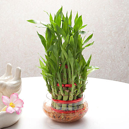 Good Luck Three Layer Bamboo Plant Birthday Gifts For Boss