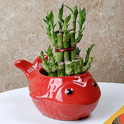 Gorgeous Lucky Bamboo Plant: Spiritual Gifts