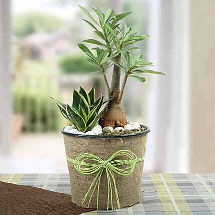 Green Home Decor Dish Garden: