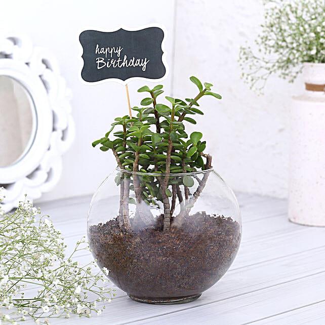 Happy Birthday Jade Plant Terrarium: Indoor Plants