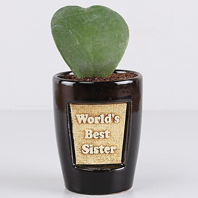 Hoya Plant For Best Sister: Ornamental Plant Gifts