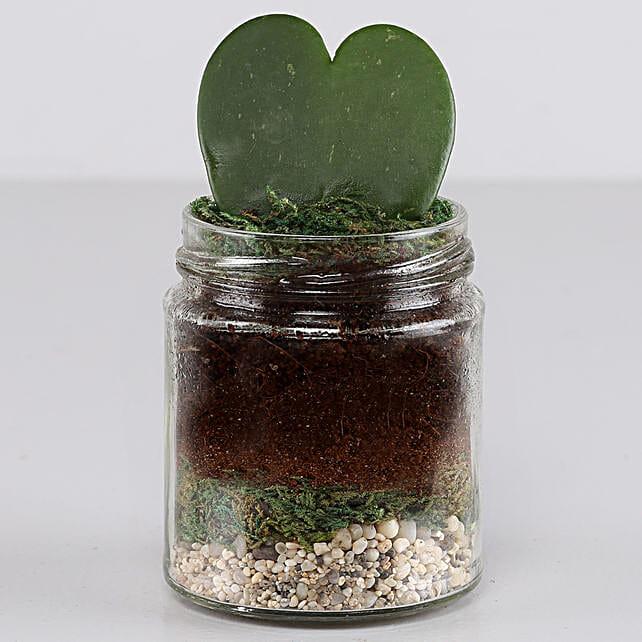 Hoya Plant Jar Terrarium: