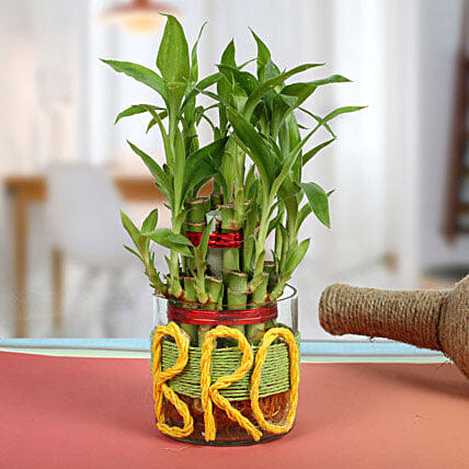 Lucky Bamboo For Brother Gift