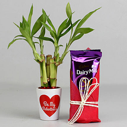 Lucky Bamboo Plant in Valentines Pot & Dairy Milk Silk: