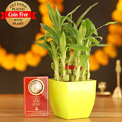 Lucky Bamboo With Free Gold Plated Coin: Desktop Plants