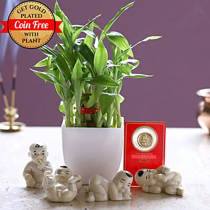Lucky Combo With Free Gold Plated Coin: Ornamental Plant Gifts