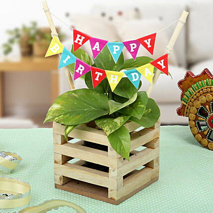 Make It Best Birthday Gift: Office Desk Plants