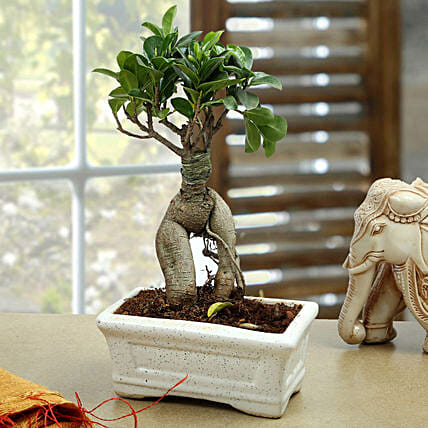 Marvellous Bonsai Plant: Office Desk Plants