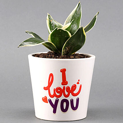 MILT Sansevieria In I LOVE YOU Pot: