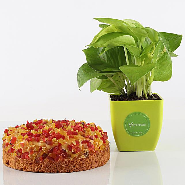 Mixed Fruit Dry Cake & Money Plant Combo: Good Luck Plants