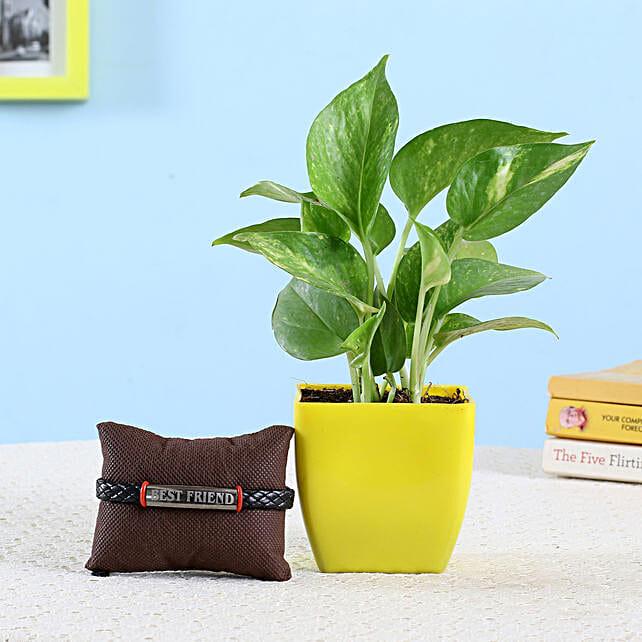 Money Plant & Friendship Band: Good Luck Plants - Friendship Day