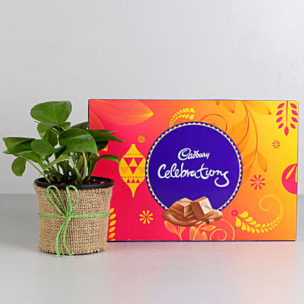 Money Plant in Black Pot with Cadbury Celebrations: