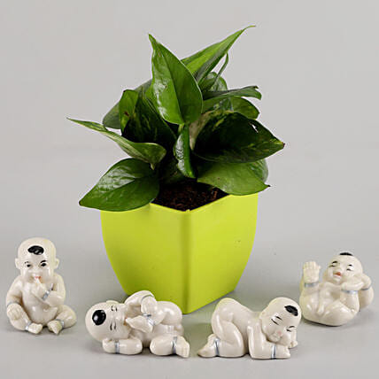 Money Plant in Green Pot & Baby Buddha Combo: Money Tree