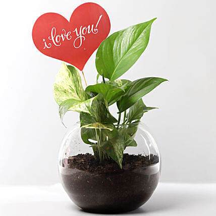 Money Plant Terrarium With Love You Tag: Send Plants for Karwa Chauth