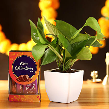 Money Plant With Cadbury Celebrations: Chocolate Combos