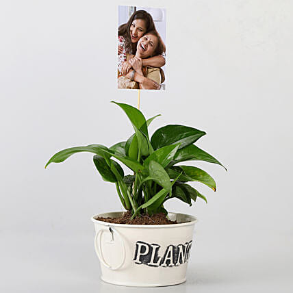 Money Plant With Your Personalised Picture: Indoor Plants
