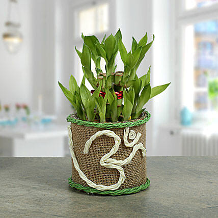 Om Two Layer Bamboo plant: Navratri Gifts