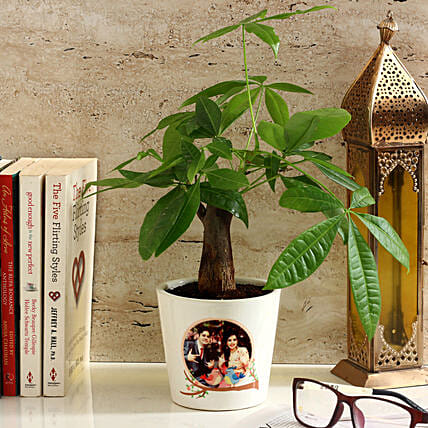 Pachira Bonsai in Personalised Photo Ceramic Pot: Personalised Pot plants