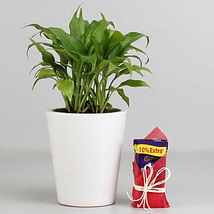 Peace Lily Plant in Ceramic Pot with Cadbury Dairy Milk: