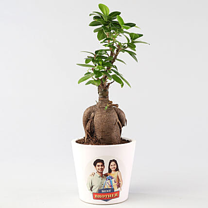 Personalised Ficus Ginseng For Rakhi: Bonsai Plants